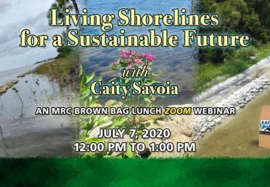 July 7 Brown Bag Seminar: Living Shorelines