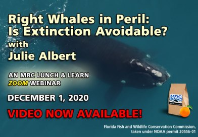 Dec. Webinar: Right Whales in Peril: Is Extinction Avoidable?