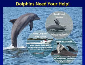 Dolphins of Sarasota Bay document