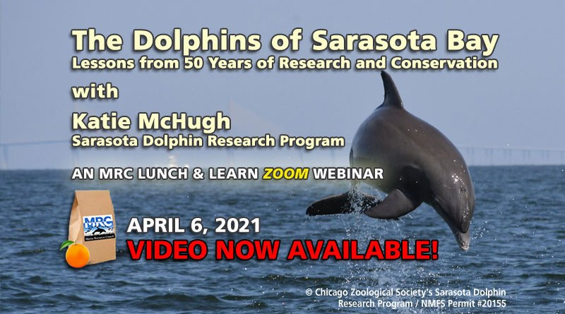 © Chicago Zoological Society's Sarasota DolphinResearch Program / NMFS Permit #20155