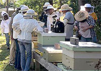 """Watch for our June Lunch & Learn Webinar """"More Than Honey!"""" with Stuart Rowan."""