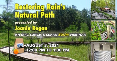 August Lunch & Learn: Restoring Rain's Natural Path