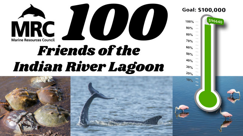 100 Friends of the IRL
