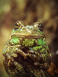 Brevard Zoo / FrogWatch USA