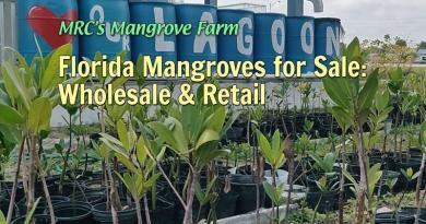MRC's Mangrove Farm