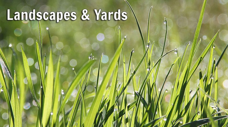 Landscapes and Yards