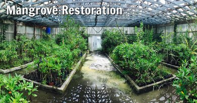 mangrove restoration: Marine Resources Council