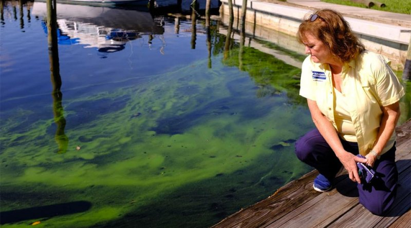 Red Tide and Green Slime: Florida Faces Epic Statewide Fight With Algae