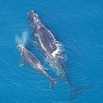 Right Whale Monitor