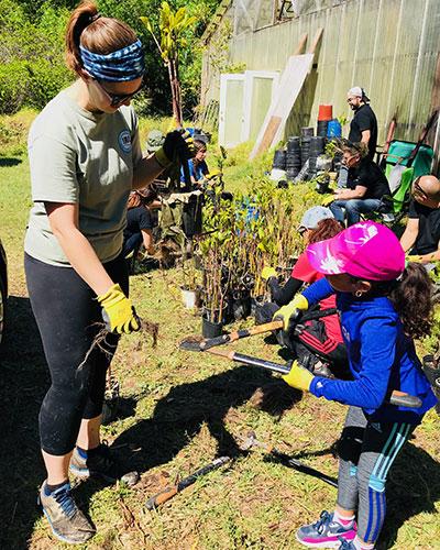 Mangrove work for Jupiter Island Greenway