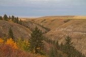 badlands slopes and forested coulees unique to the rosebud