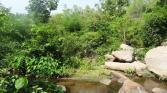 Eastern-Ghats-King-Cobra-Habitat-4