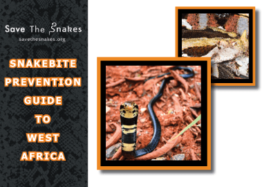 snakebite-prevention-guide-west-africa