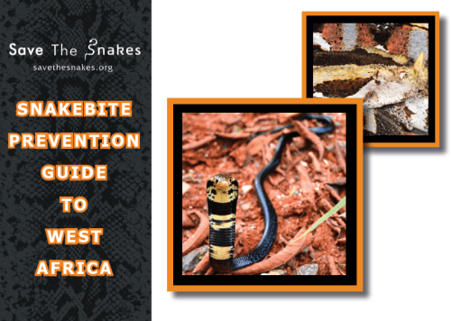 snakebite-prevention-guide-west-africa
