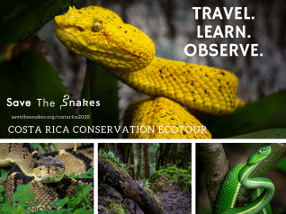 Costa Rica snake adventure 2020