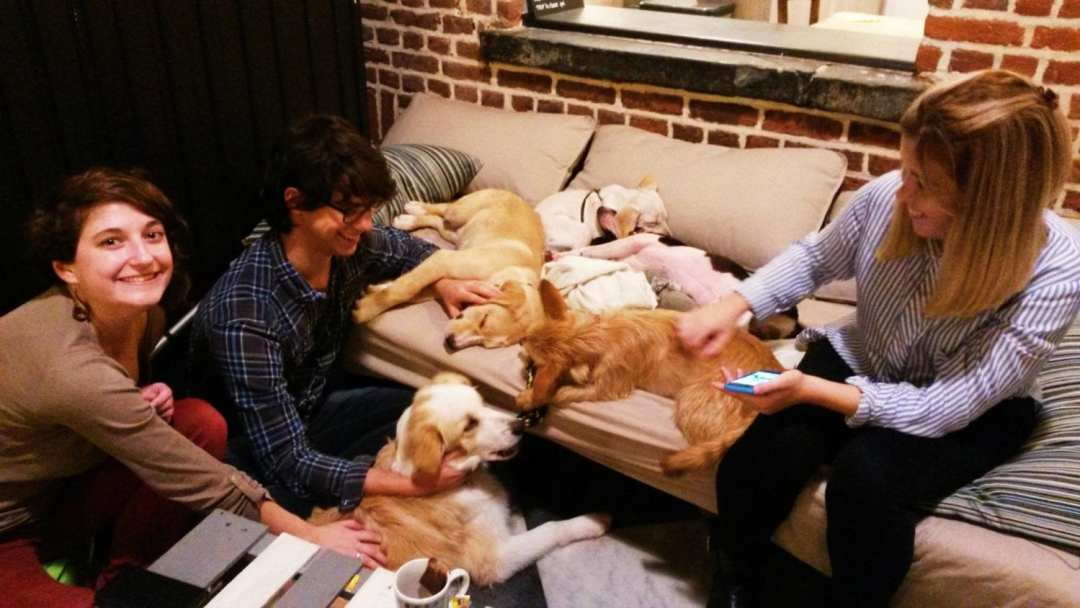 WAF, le 1er café à chiens d'Europe Café & canidés : visite du WAF, le 1er café à chiens d'Europe