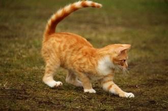 cat-1234998_640