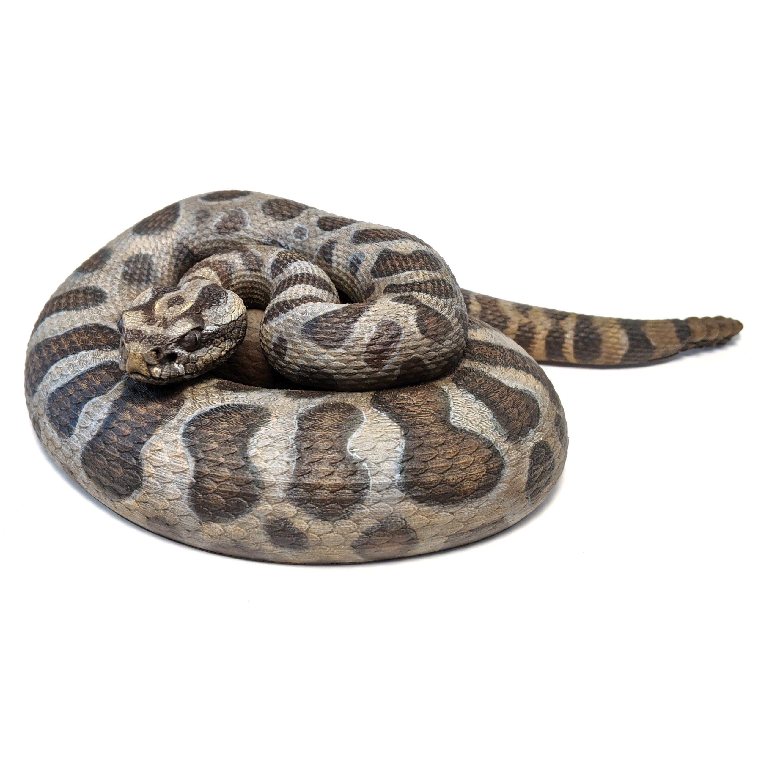 Massasauga Rattlesnake (Sistrurus Catenatus) Model