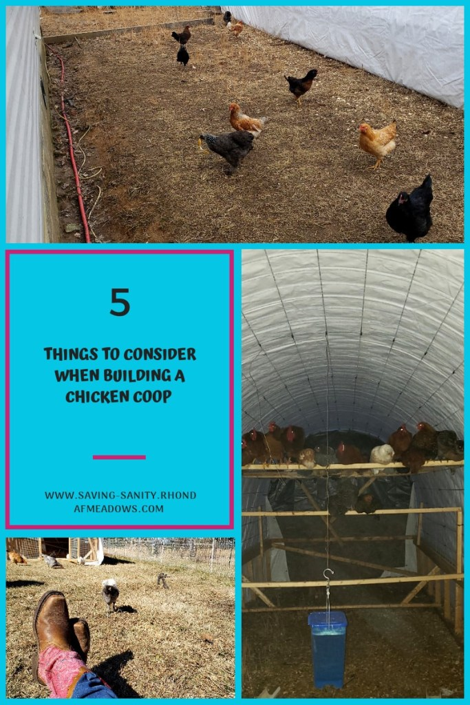 Photos of chickens