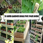 10 Herb Garden Ideas For Your Home – Find an Herb Garden for Every Space