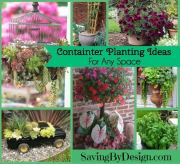 Container Planting Ideas Perfect for Any Space