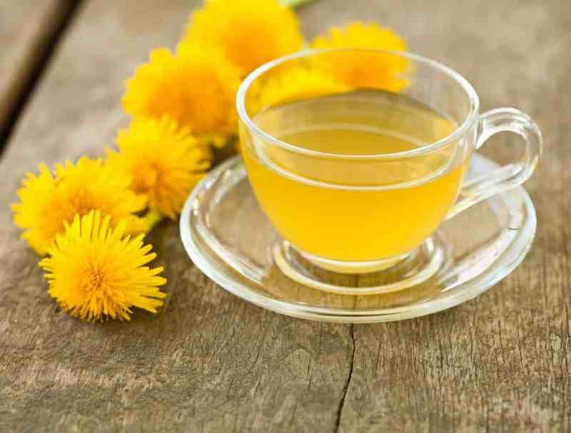 Dandelion Tea - Fat Burning Drink