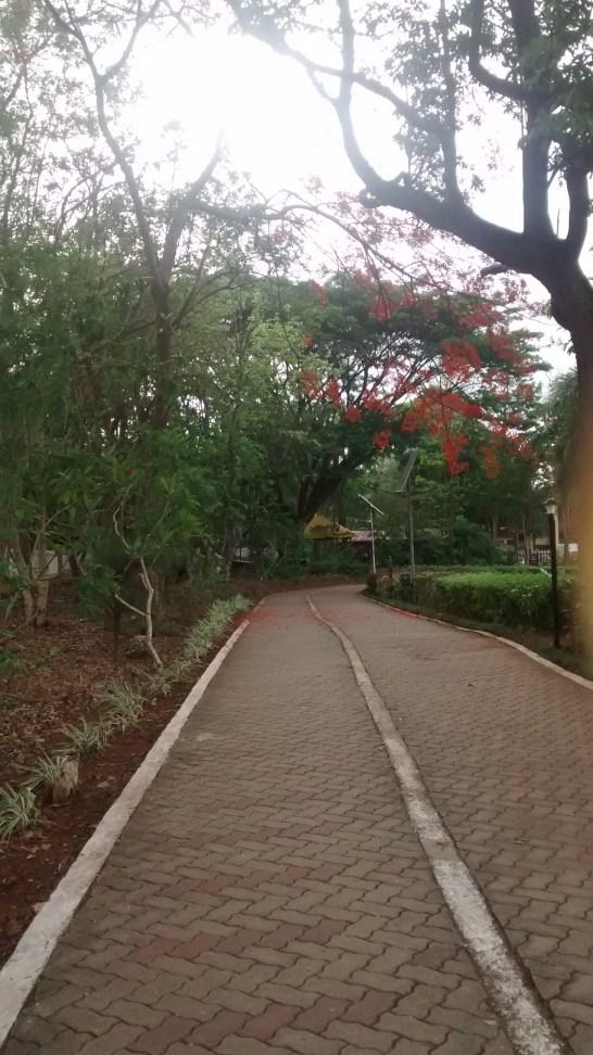 walking path in nearby park