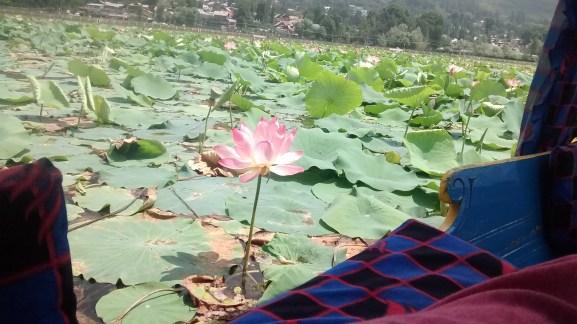 Boat ride at Dal Lake Kashmir