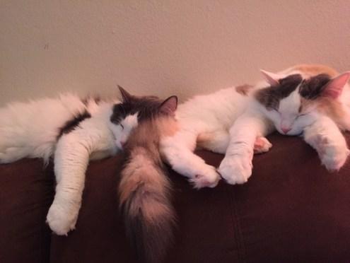 Cuddle Kitties II