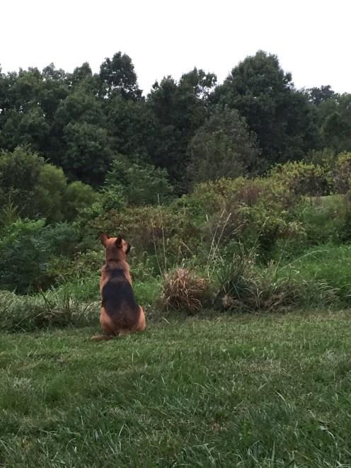 Surveying 'her' land
