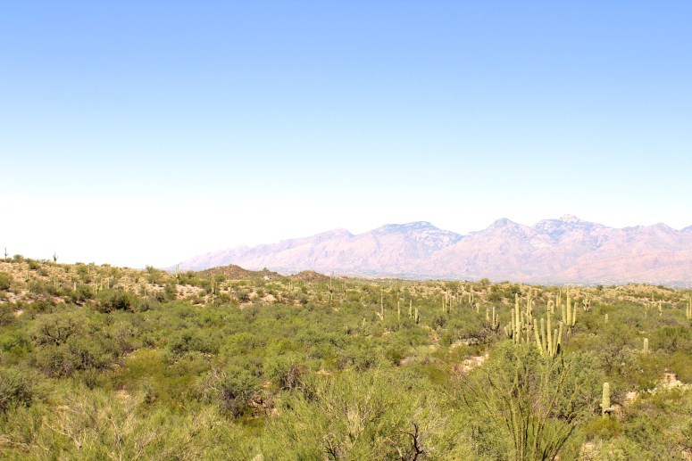 Views of Catalina Mountains from Saguaro National Park East