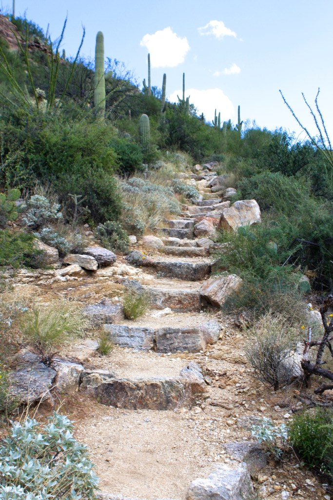 Stairs on Douglas Springs Trail in Saguaro National Park