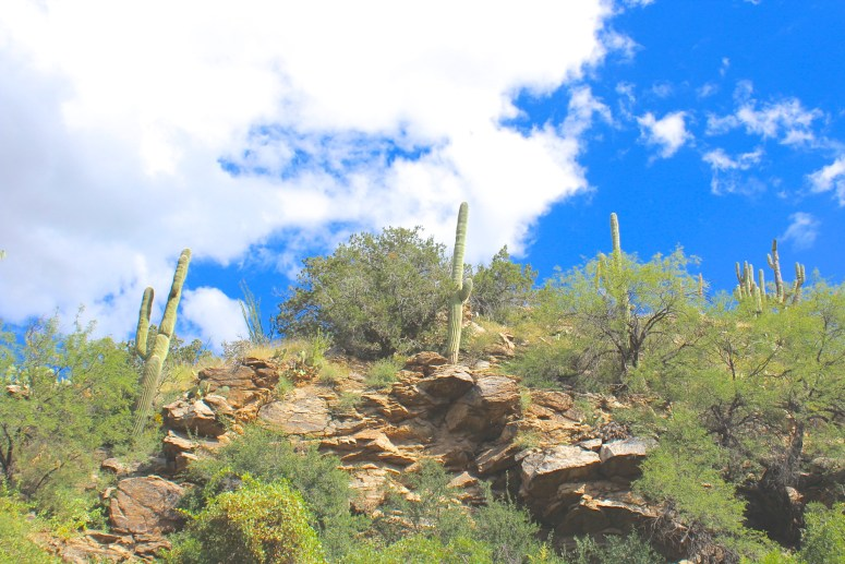 End of Bridal Wreath Falls Trail Saguaro National Park