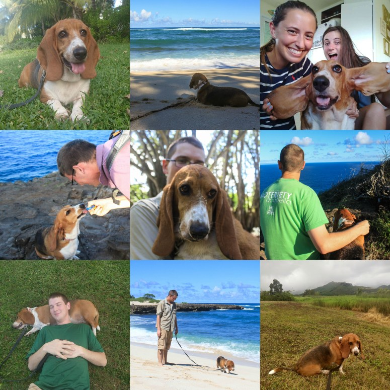 Basset Hound puppy photo collage