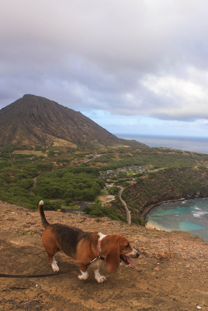 dog hiking in hawaii koko head hanauma bay ridge trail oahu hawaii independence day 2018