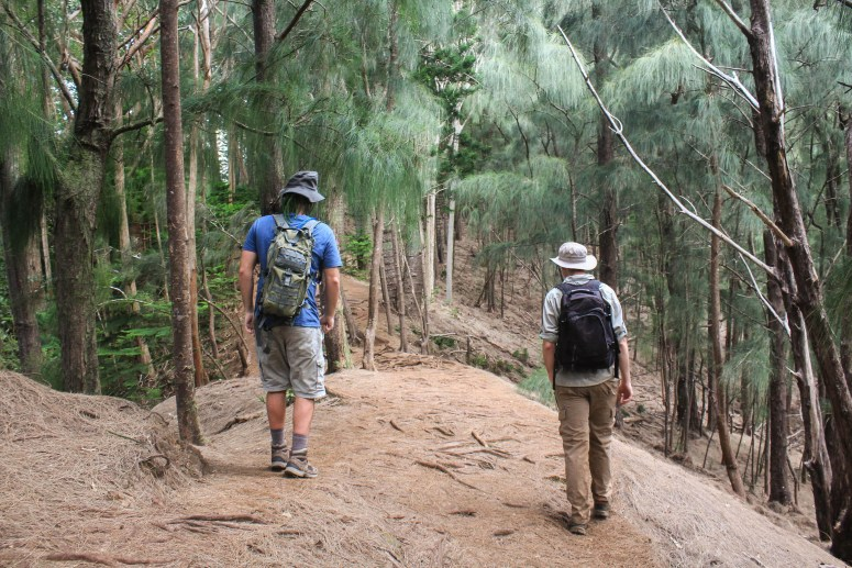 Hiking through pine trees on Kuli'ou'ou Ridge Trail