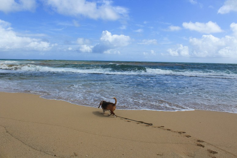 Beach along the Kahuku Trail in Oahu, Hawaii