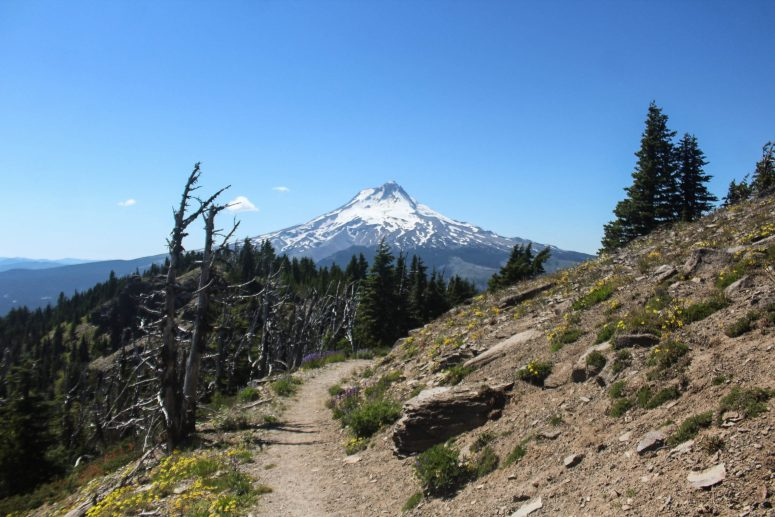 Lookout Mountain / Mt. Hood National Forest