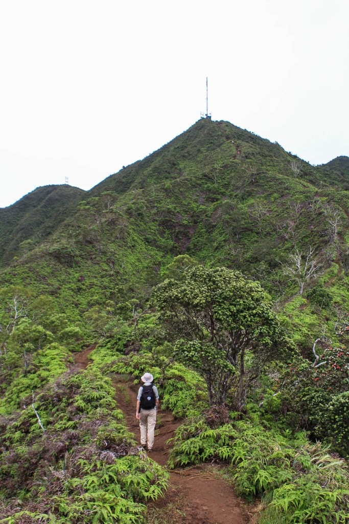 hiking wiliwilinui ridge trail to the ko'olau summit honolulu oahu hawaii