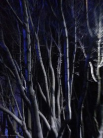 silver-and-blue-trees-at-night-yerba-buena-center-for-the-arts-copy