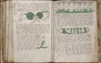 Voynich, f 83r et 84v