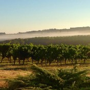Bergerac Saussignac AOC France Vineyards