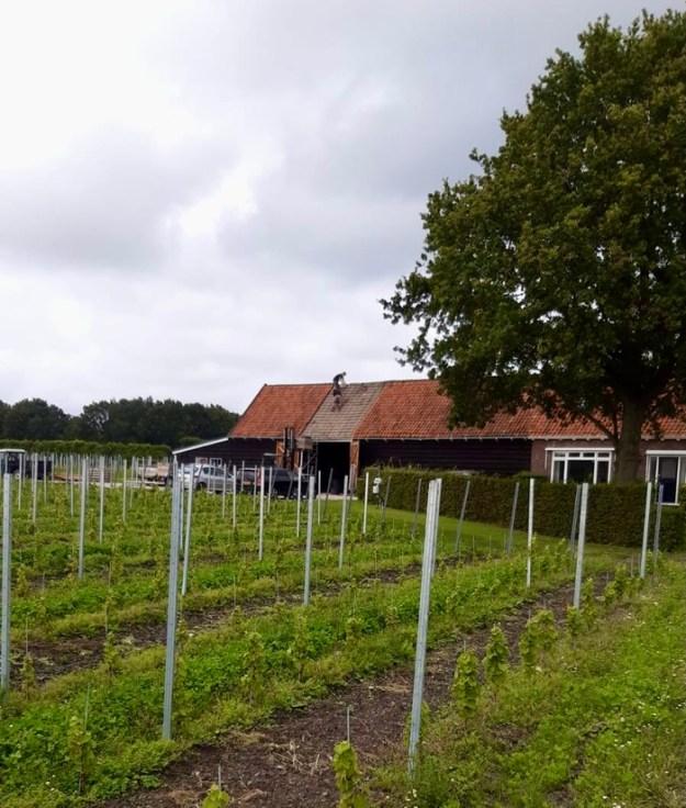 Winery Wijndomein De Boe Middelburg Zeeland Netherlands
