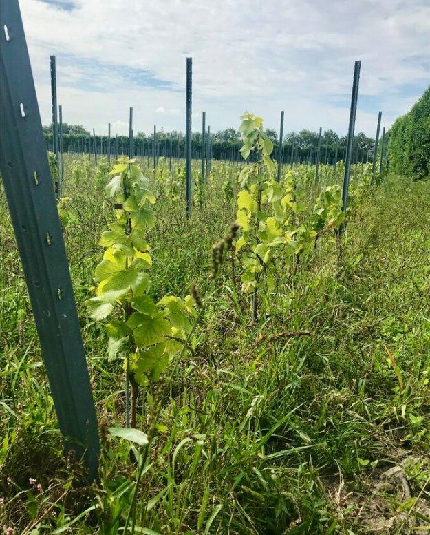Wijndomein De Boe Netherlands winery