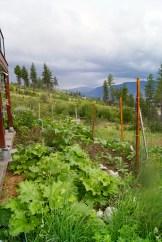 Keeping a garden photo - Karen Anderson
