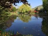 pond - photo - Karen Anderson