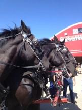 horses - photo - Karen Anderson