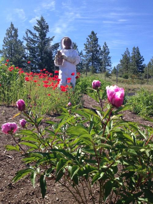 Helen Kennedy, beekeeper at Arlo's Honey Farm, Kelowna, BC