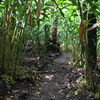 cardamom path - photo - Karen Anderson