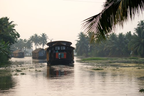 luscious coconut vegetation in the Backwaters of Kerala in South India - photo - Karen Anderson